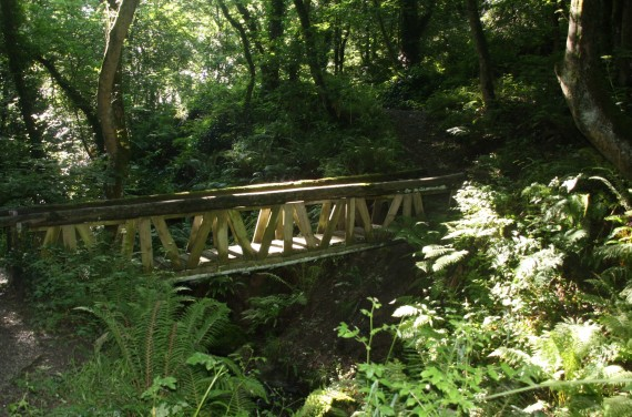 Newtown Wood, Tramore, Co. Waterford.