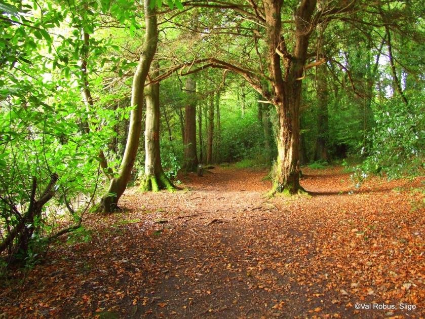 Hazelwood Forest, Sligo.