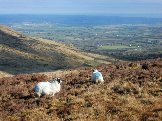 View of Co. Waterford from  the Comeragh Mountains.