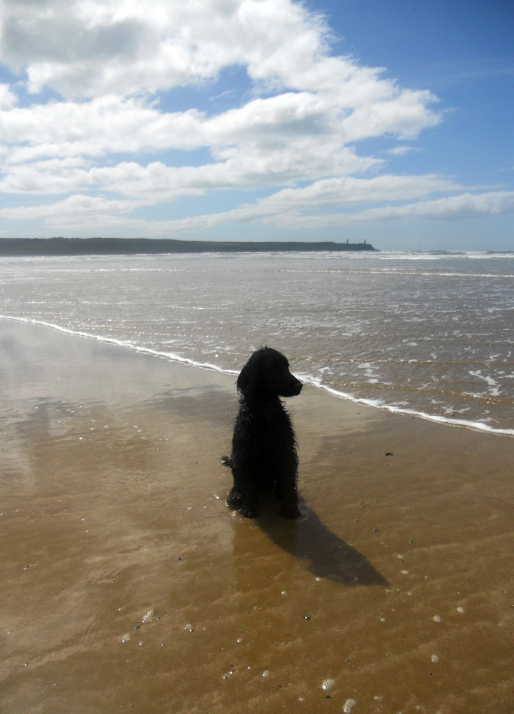 Stan: Taking a Breather in Tramore Beach