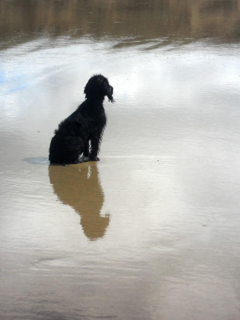 Reflection of a Black Dog