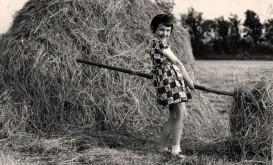 Haymaking. Photo: Frank Tubridy