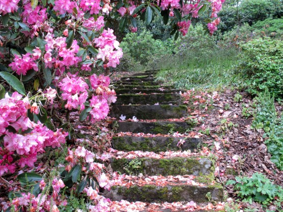 Steps to Solace