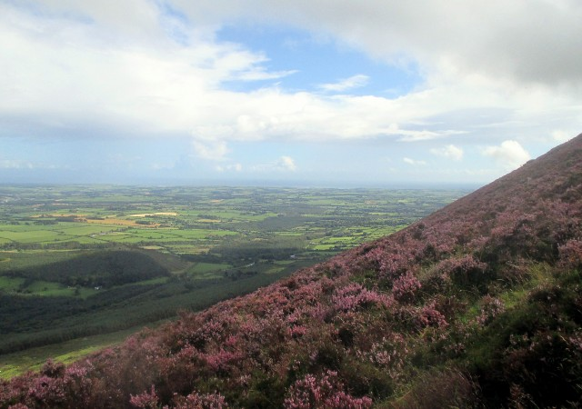 Heathery Climb with the Co. Waterford Coastline in the Distance