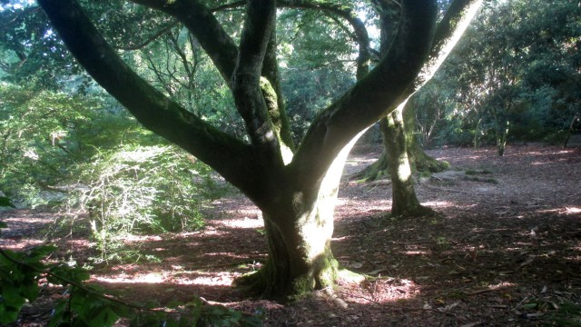 Pathless Woods
