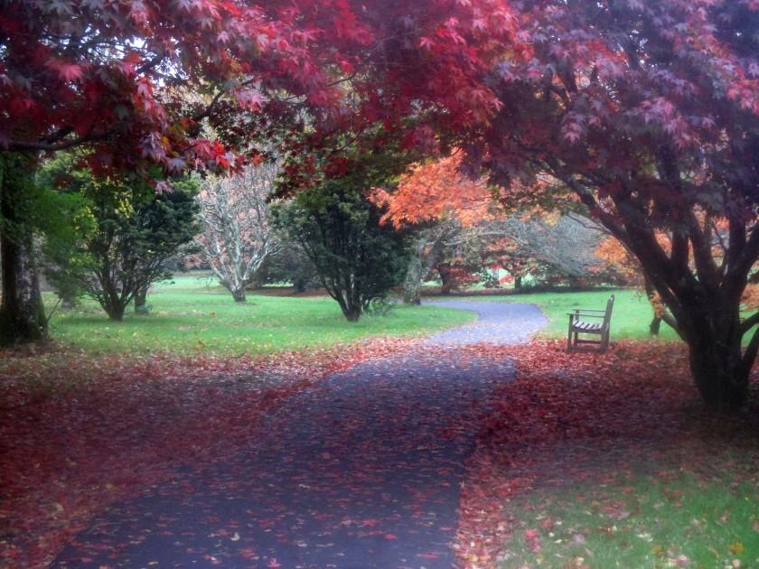 John F. Kennedy Arboretum, Co. Wexford