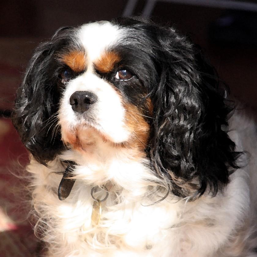 Sophie (2000-2013)