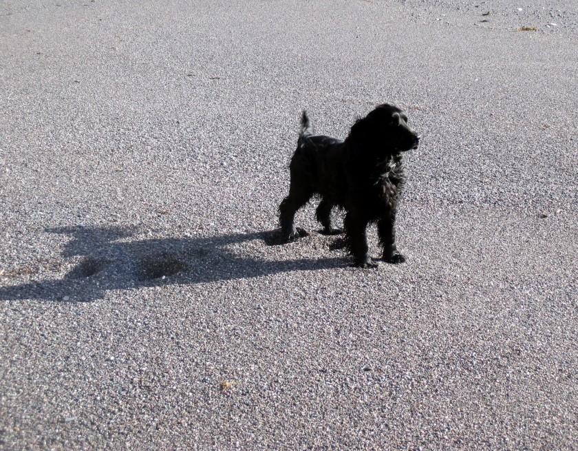 Gentle Shadow