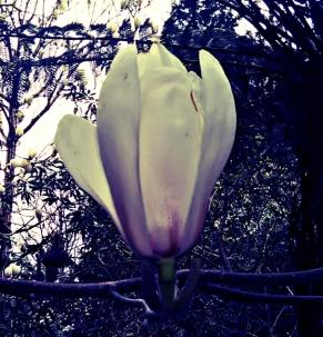 PicsArt_04-06-02.39.48